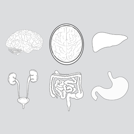 cecum: Organ systems within the body isolate is on gray background Illustration