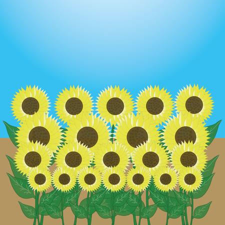 pedicle: sunflower in the garden