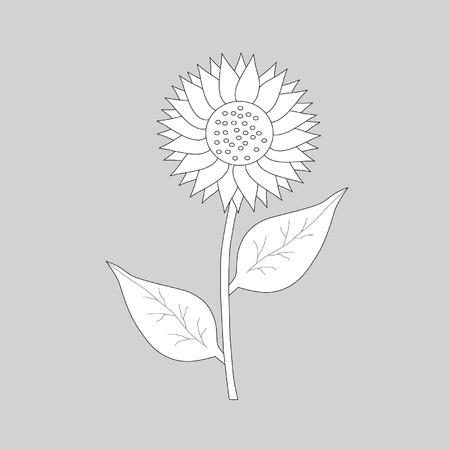 pedicle: sunflower on gary background