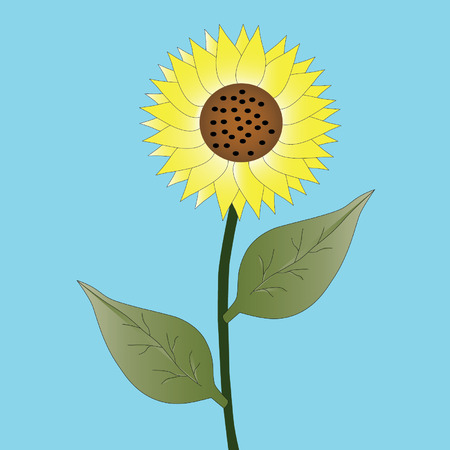 pedicle: sunflower on blue background