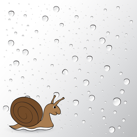 drops of water: snail on water drops background