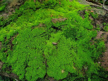Grünes Moos bedeckt auf dem Stein