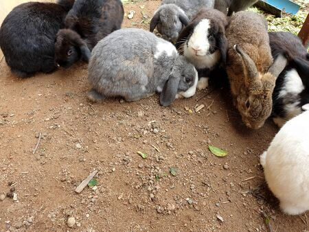 Group of Rabbit in the animals farm.