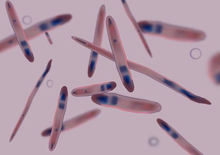 pathogen: De pat�genos, bacterias y c�lulas de bacteria en microsc�pica como una ilustraci�n m�dica de la infecci�n enfermedad bacteriana en un cuerpo humano