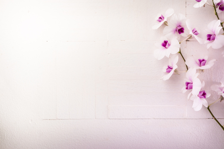 red orchid: Purple orchid on white Wood background Stock Photo