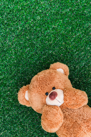 shelter: Cute teddy bear on green grass background