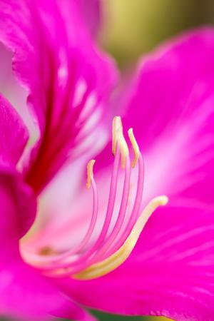 carpel: Flower carpel macro, close up