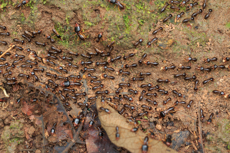 burrows: Motion of worker termites on the forest floor in Saraburi thailand. Shallow DOF