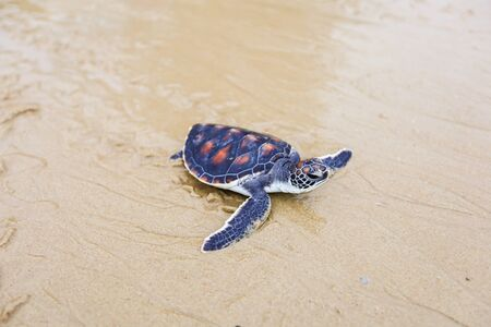 Helping and conserving sea turtles for release to nature.
