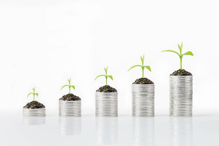 Silver coins and tree growth. Money growth concept, can be use with a variety of businesses