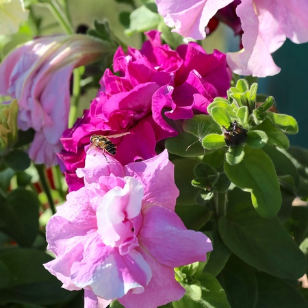 Pink flowers and insects. Stock Photo