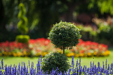 Ornamental park garden with a spherical box tree and lavender in the foreground and de-focused flower beds containing colourful flowers and bushes in the background