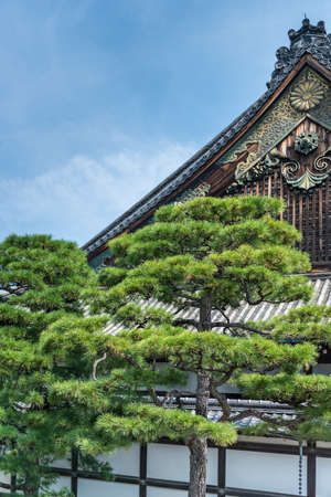 Japanese pine trees infront the apex of a traditional wooden Japanese building Imagens