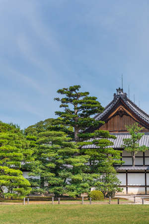Japanese pine trees in front the end wall of a traditional wooden Japanese building