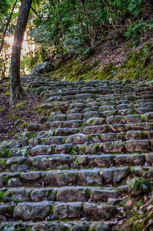 Moss covered stone steps leading up through woods on a steep hillside towards the sinking sun Imagens