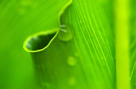 natures: Morning dew on natures circle
