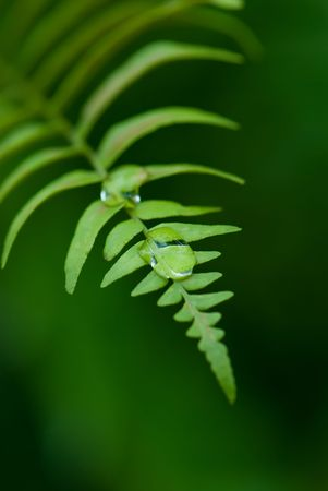 offshoot: Exotic tropical ferns with shallow depth of field (dof) in Malaysia. Stock Photo