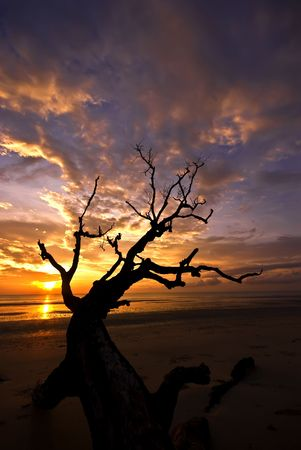 Dead branches against dramatic sunrise in Pahang, Malaysia. photo