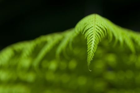 Tropical green ferns with shallow depth of field (dof) photo