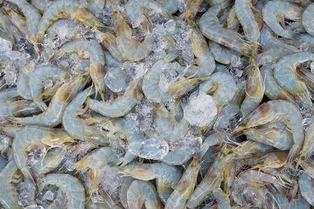Shrimp fresh at street food market in thailand