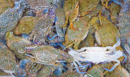 Crab fresh at street food market in thailand