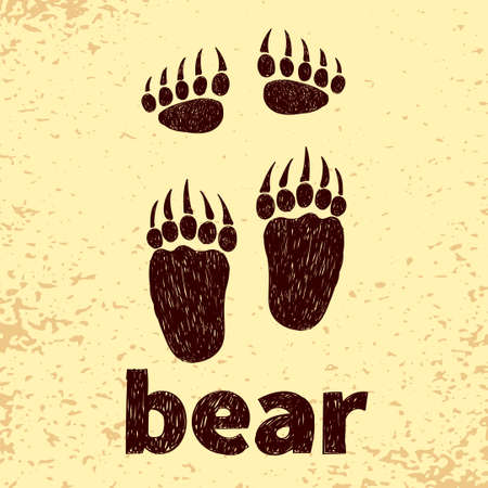 hind: Bear footprints, front and hind paws. Doodle vector illustration.