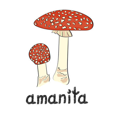 uneatable: Amanita mushroom isolated on white background. Hand drawn vector illustration.