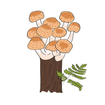 agaric: Honey agaric mushrooms isolated on white. Hand drawn vector illustration. Illustration