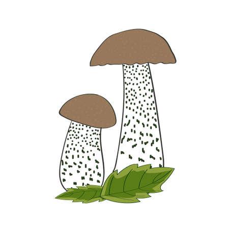 eatable: Mushrooms isolated on white background. Couple of boletus. Vector illustration.
