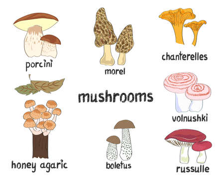 morel: Mushrooms set. Collection of hand drawn vector illustrations isolated on white.