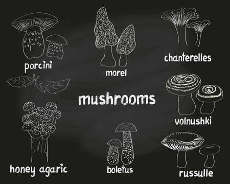 eatable: Mushrooms set. Collection of doodle hand drawn eatable fungus isolated on black. Vector sketchy illustrations.