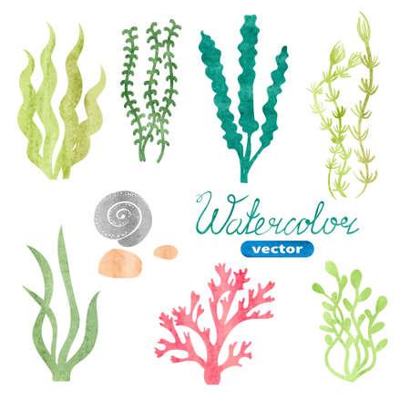 algas marinas: Conjunto de algas acuarela, corales y piedras aisladas sobre fondo blanco. estableció bajo el agua algas acuarela. Plantas del acuario colección. la vida marina del vector.
