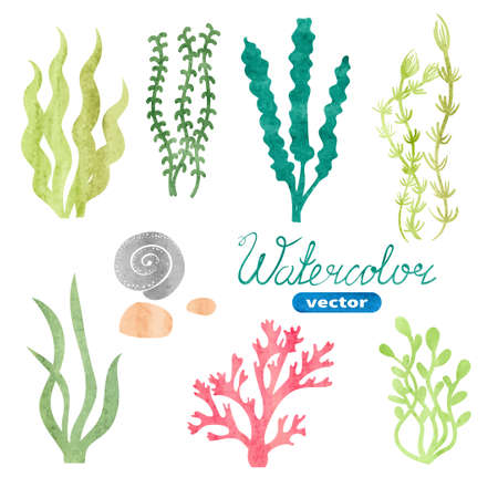 seaweed: Set of watercolor seaweed, corals and stones isolated on white background. Underwater watercolor algae set. Aquarium plants collection. Vector marine life.