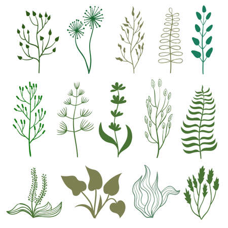 nature silhouette: Set of hand drawn herbs. Doodle branches isolated on white. Collection of herbal graphic elements, leaves and flowers. Vector illustration. Illustration
