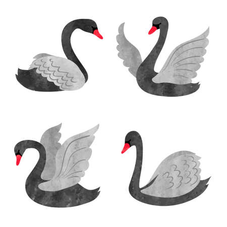 Vector set of beautiful watercolor black swans.