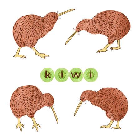 Reeks vogels van de waterverfkiwi die op wit wordt geïsoleerd. Vector illustratie. Vector Illustratie