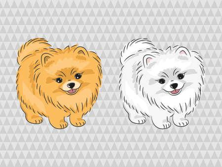 Pomeranian dog. Vector illustration of cute puppy. Vettoriali
