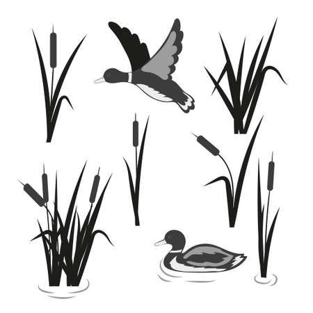 Vector pond set. Reeds and ducks isolated on white.