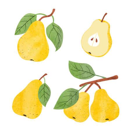 Set of watercolor pears. Vector fruit illustration. Standard-Bild - 124348240