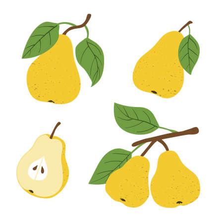 Set of pears isolated on white background. Vector fruit illustration. Standard-Bild - 124348251