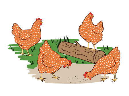 Hens in a meadow vector illustration. Country scene.
