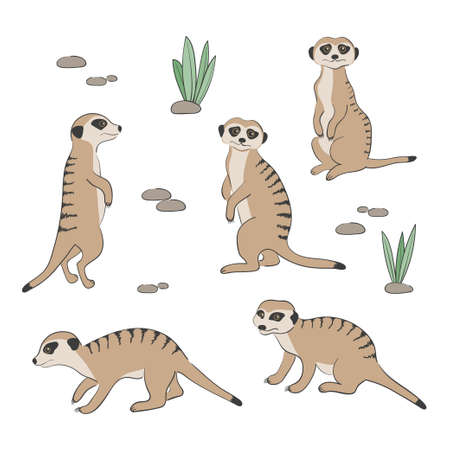 Set of cute Meerkats isolated on white background. Vector illustration.