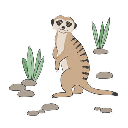 Cute Meerkat isolated on white background. Vector illustration.