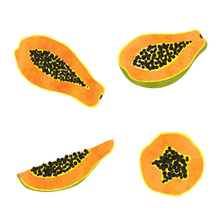 Set of watercolor papaya fruit. Vector illustration of slices isolated on white. 矢量图像