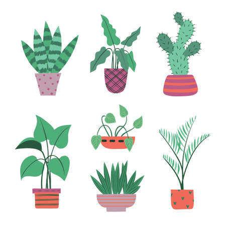 Set of plants in pots isolated on white background. Vector illustration 矢量图像