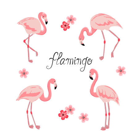 Set of flamingo isolated on white. Vector illustration of tropical bird