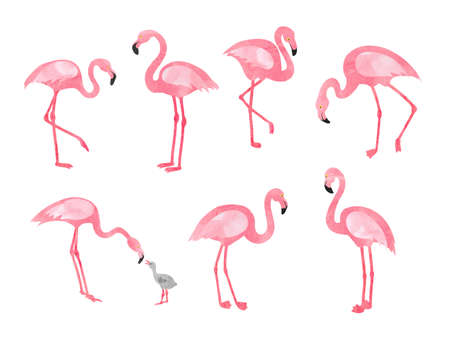 Set of watercolor flamingos isolated on white. Vector illustration of  beautiful flamingo birds.