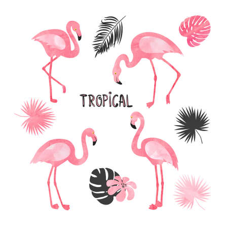 Set of  flamingos isolated on white. Vector tropical illustration of beautiful flamingo birds and leaves.