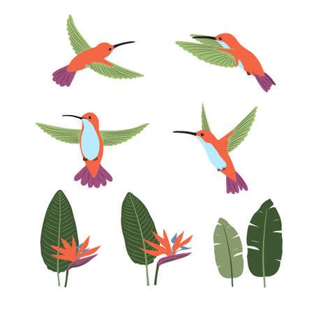 Set of cute cartoon hummingbirds and strelitzia . Vector collection of tropical birds and plants.