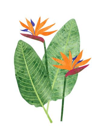 Strelitzia reginae isolated on white. Bird-of-paradise flower vector watercolor illustration 矢量图像